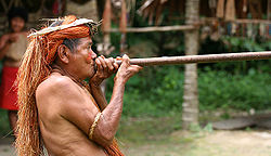 https://upload.wikimedia.org/wikipedia/commons/thumb/8/86/Yahua_Blowgun_Amazon_Iquitos_Peru.jpg/250px-Yahua_Blowgun_Amazon_Iquitos_Peru.jpg