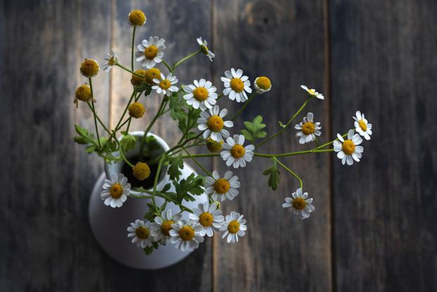 flores de la manzanilla